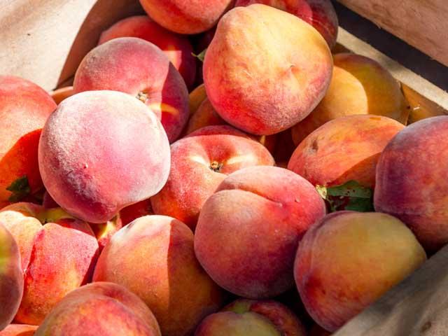 Die Marktanalyse untersuchte auch den Polyphenolgehalt von Pfirsichen