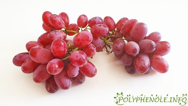 OPC in roten Weintrauben