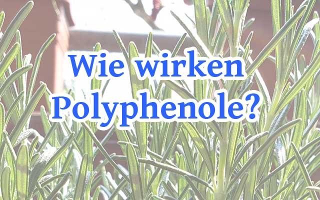 Wie wirken Polyphenole