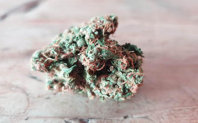 In Cannabis finden sich viele Polyphenole