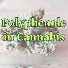 Polyphenole in Cannabis