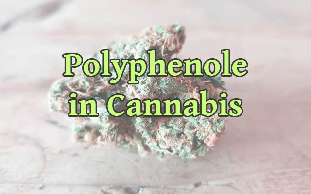 Polyphenole in Cannabis