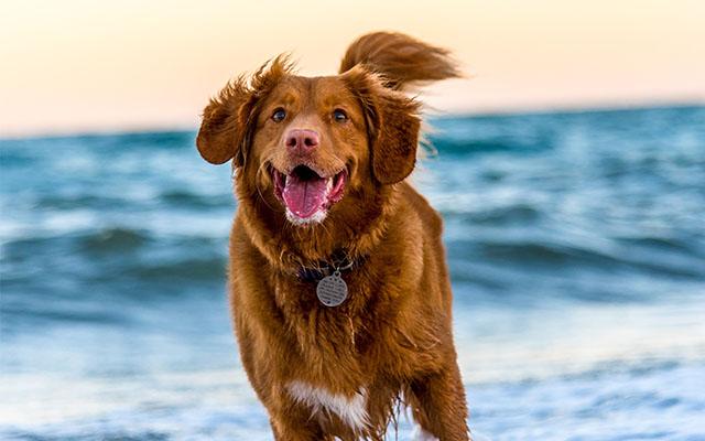 Gesunder Hund - Glücklicher Hund